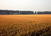 优质品种和种植技术体系